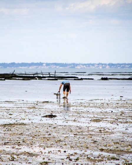 Pêche à pied à Noirmoutier